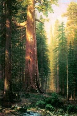 Albert Bierstadt The Big Trees Mariposa Grove California by Albert Bierstadt