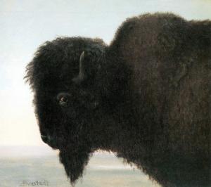 Bison Head by Albert Bierstadt
