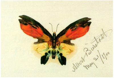 Albert Bierstadt Butterfly 2 Art Print Poster