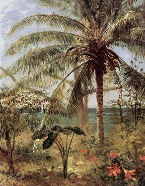 Palm Tree, Nassau 1892 by Albert Bierstadt