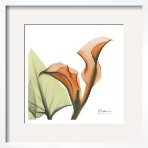 A Gift of Calla Lilies in Orange by Albert Koetsier