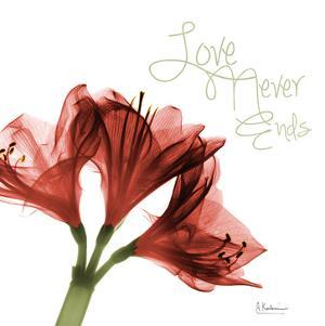 Amaryllis Love by Albert Koetsier