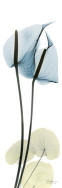 Anthurium in Blue by Albert Koetsier
