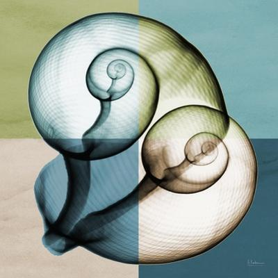 Aqua Filter 2 by Albert Koetsier