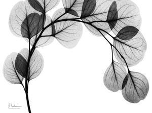 Arch of Eucalyptus in Black and White by Albert Koetsier