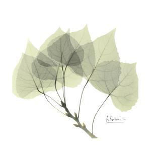 Aspen in Green by Albert Koetsier