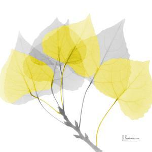Aspen Yellow Gray by Albert Koetsier