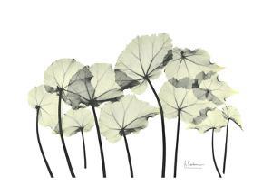 Begonia Leaves in Green by Albert Koetsier