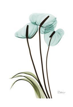 Blue Anthurium by Albert Koetsier