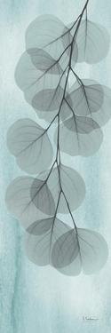 Blue Stone Eucalyptus by Albert Koetsier