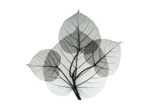 Bo Leaves 1 by Albert Koetsier