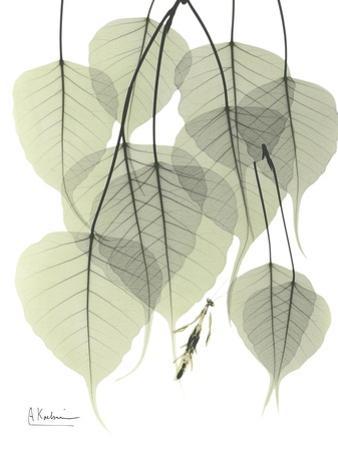 Bo Tree Nature by Albert Koetsier