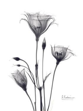 Bouquet of Gentian in Black and White by Albert Koetsier
