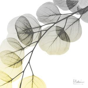 Brilliant Eucalyptus 1 by Albert Koetsier
