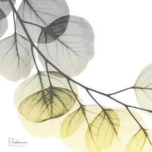 Brilliant Eucalyptus 2 by Albert Koetsier
