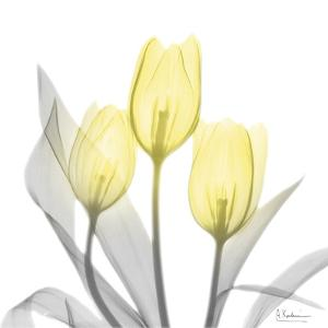 Brilliant Tulips 1 by Albert Koetsier