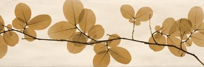 Brown Myrtle Moments by Albert Koetsier