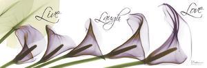 Calla Lilies Across in Purple, Live by Albert Koetsier