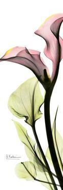 Calla Lily in Color by Albert Koetsier