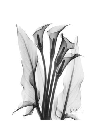 Calla Lily Quad in Black and White by Albert Koetsier