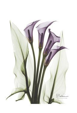 Calla Lily Quad in Color by Albert Koetsier