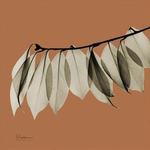 Camelia Leaf by Albert Koetsier