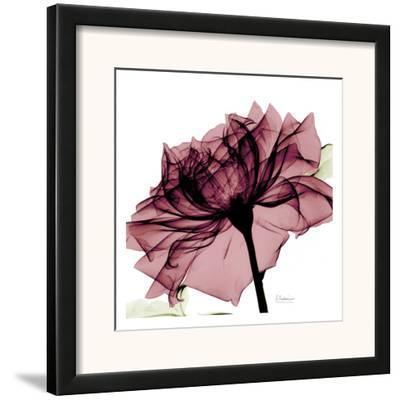 Chianti Rose by Albert Koetsier