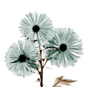 Chrysanthemum Love by Albert Koetsier