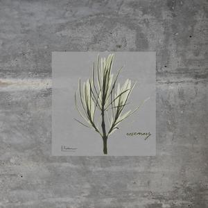 Concrete Rosemary by Albert Koetsier