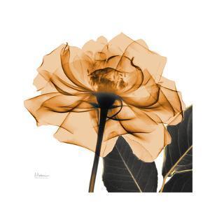 Copper Rose Black by Albert Koetsier