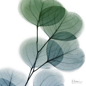 Dull Eucalyptus by Albert Koetsier