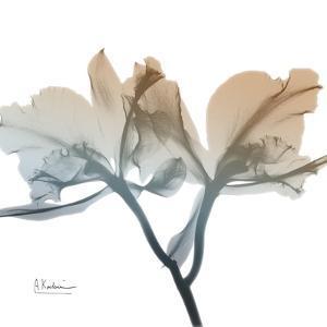 Earthy Orchid by Albert Koetsier