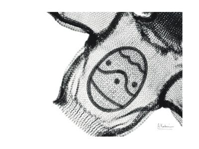 Editorial X-Ray Sweater