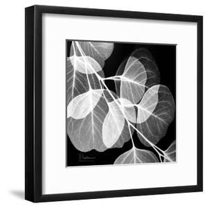 Eucalyptus Black and White by Albert Koetsier