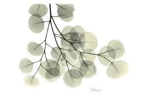 Eucalyptus by Albert Koetsier