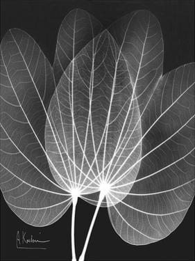 Extravagant Orchid Tree by Albert Koetsier
