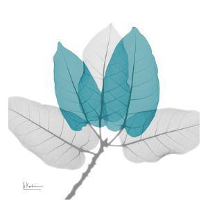 Ficus Burkey Teal by Albert Koetsier