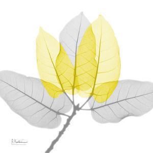 Ficus Burkey Yellow Gray by Albert Koetsier