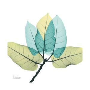 FicusBurkey by Albert Koetsier