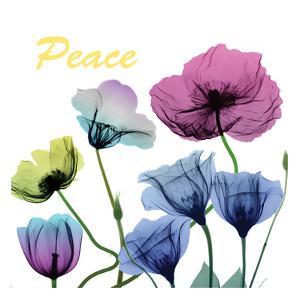 Floral Rainbow Peace by Albert Koetsier