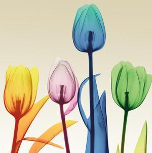 Floral Splurge 1 by Albert Koetsier