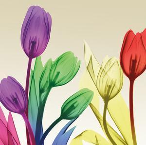 Floral Splurge 2 by Albert Koetsier