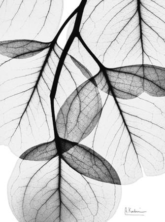 Flowing Eucalyptus in Black and White by Albert Koetsier