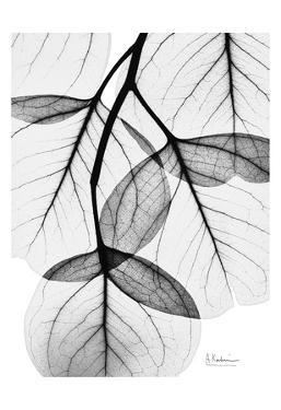 Flowing Eucalyptus in Black and White by Albert Koetsier