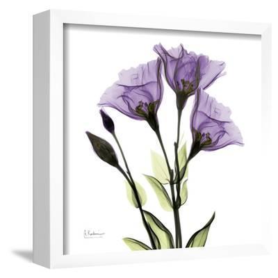 Gentian in Purple by Albert Koetsier