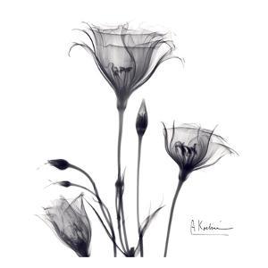 Gentian Trio in Black and White by Albert Koetsier