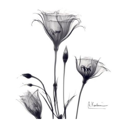 Gentian Trio in Black and White by Albert Koetsier