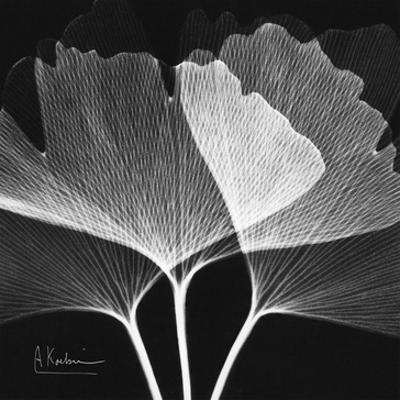 Ginkgo Close Up Black and White by Albert Koetsier