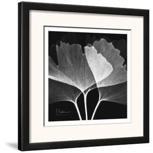 Ginkgo Close Up Black and White by Albert Koetsier