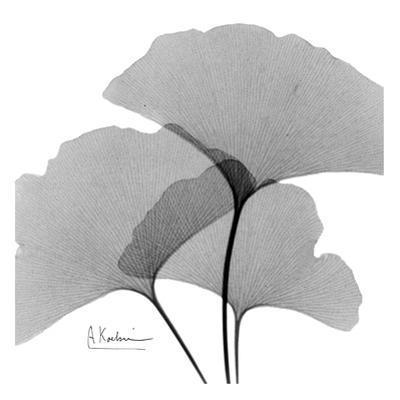 Ginkgo Leaves Trio Black and White